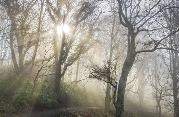sunburst early morning misty scene in the woods by Culzean Castle in Ayrshire. A photograph by allan wright